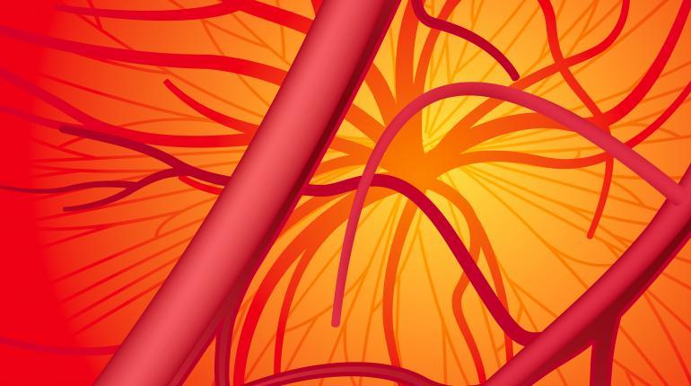 vasos sanguineos en 3d