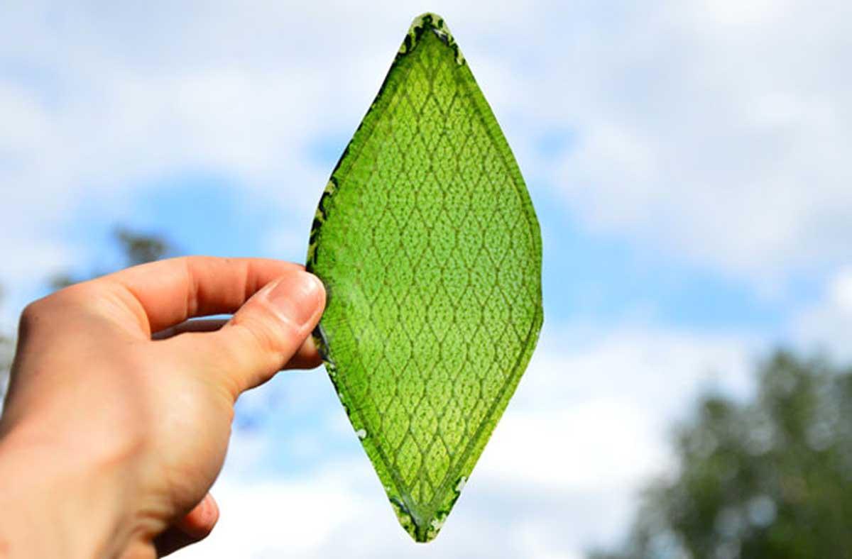 Silk-Leaf2