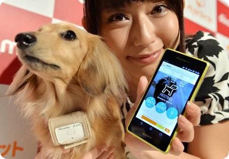 Petfit-el-collar-que-te-permite-chequear-la-salud-de-tu-mascota-en-todo-momento