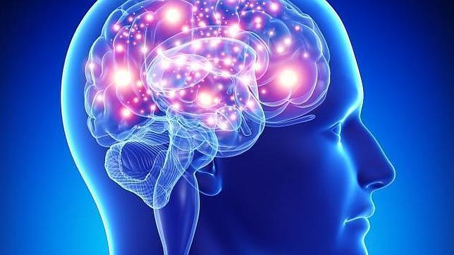 proteina-cerebro-longevidad--644x362