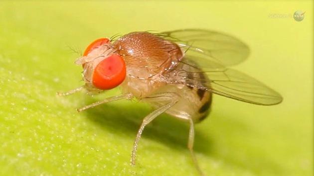moscas en el espacio