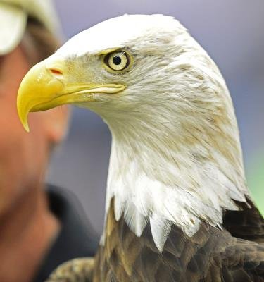 aves en extincion