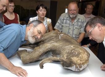 mamut-congelado