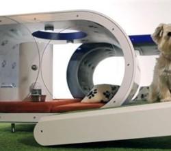 caseta de perro inteligente
