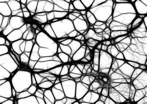 neurons-440660_640-620x438