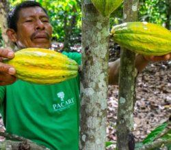 1533561925_Imagen_productores_de_cacao
